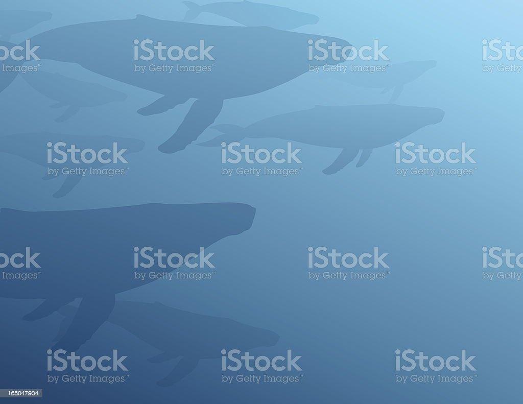 Gentle Giants - Humpbacks vector art illustration