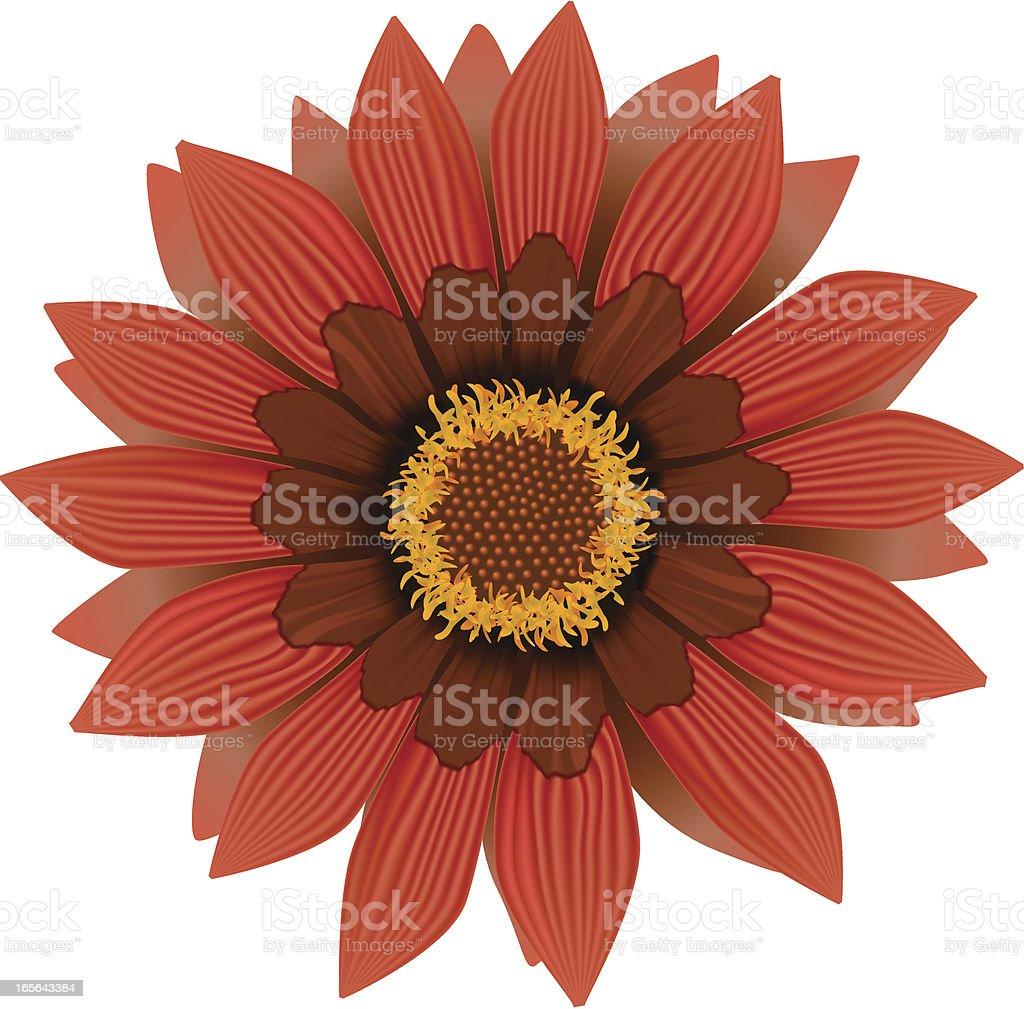 Gerbera Daisy royalty-free stock vector art