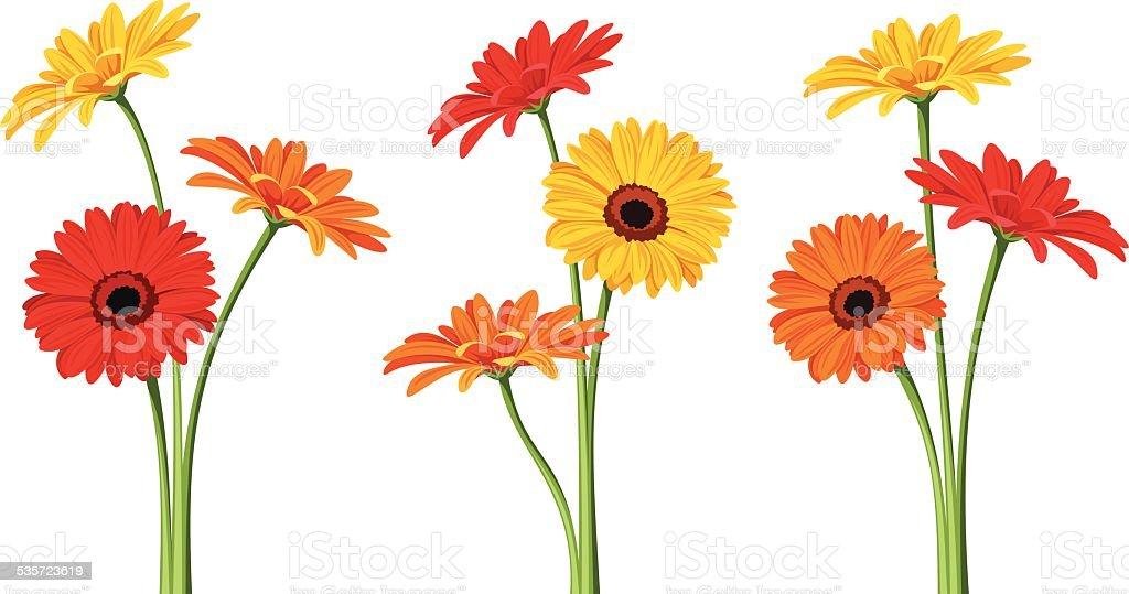 Gerbera flowers. Vector illustration. vector art illustration
