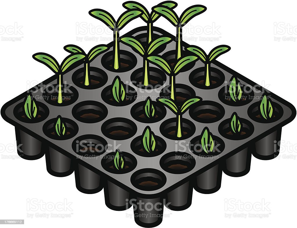 Germination royalty-free stock vector art