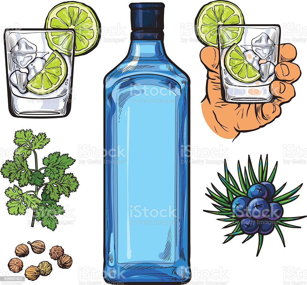 Gin bottle, shot glass with ice and lime, juniper berries vector art illustration