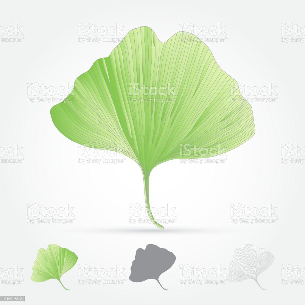 Ginkgo biloba, leaf vector art illustration