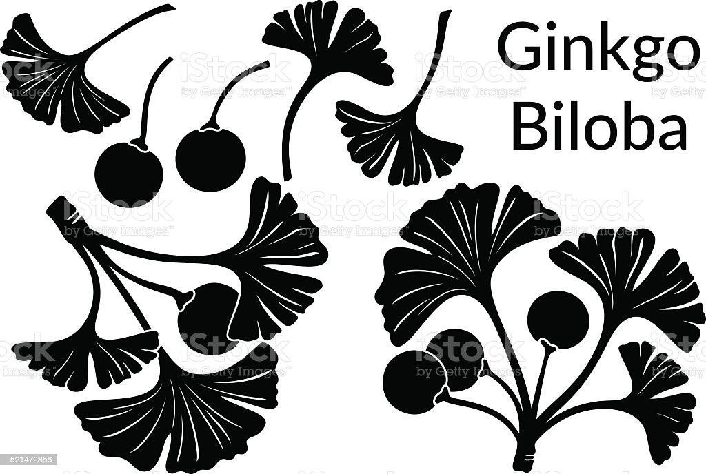 Ginkgo Biloba Leaves Pictograms vector art illustration
