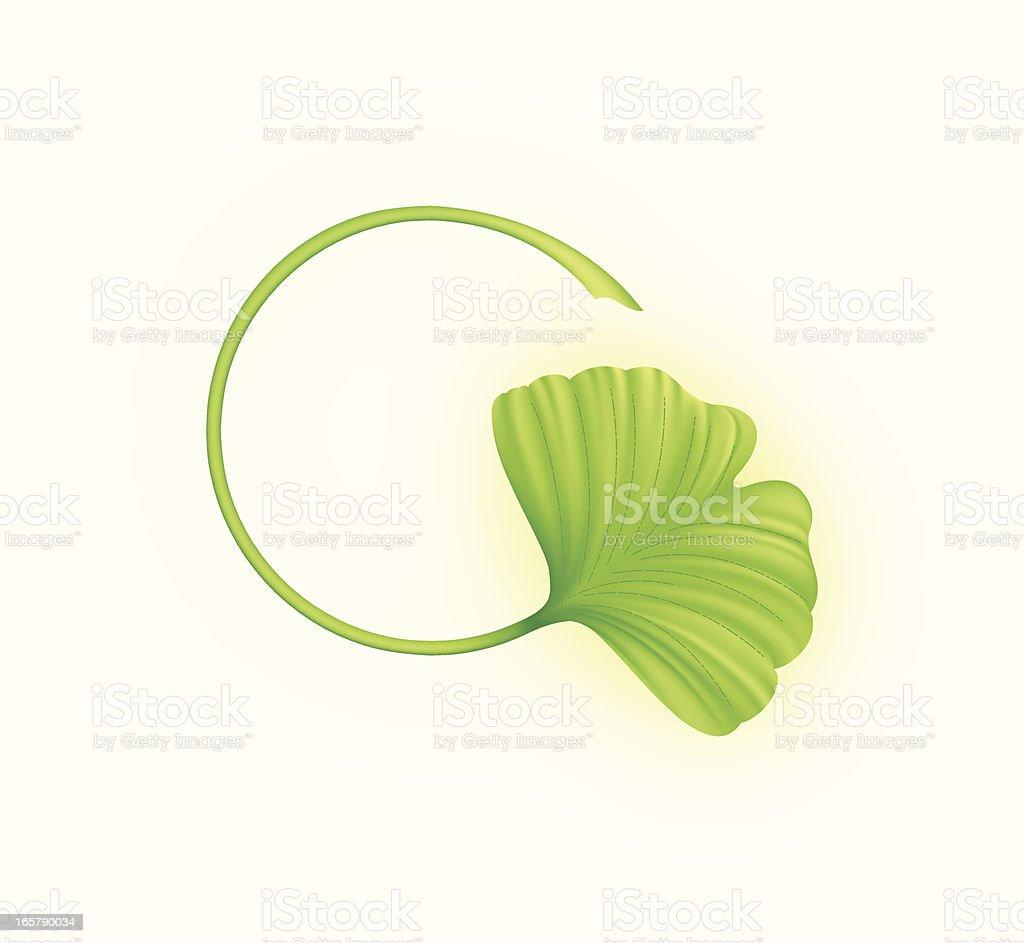 Ginkgo Leaf vector art illustration