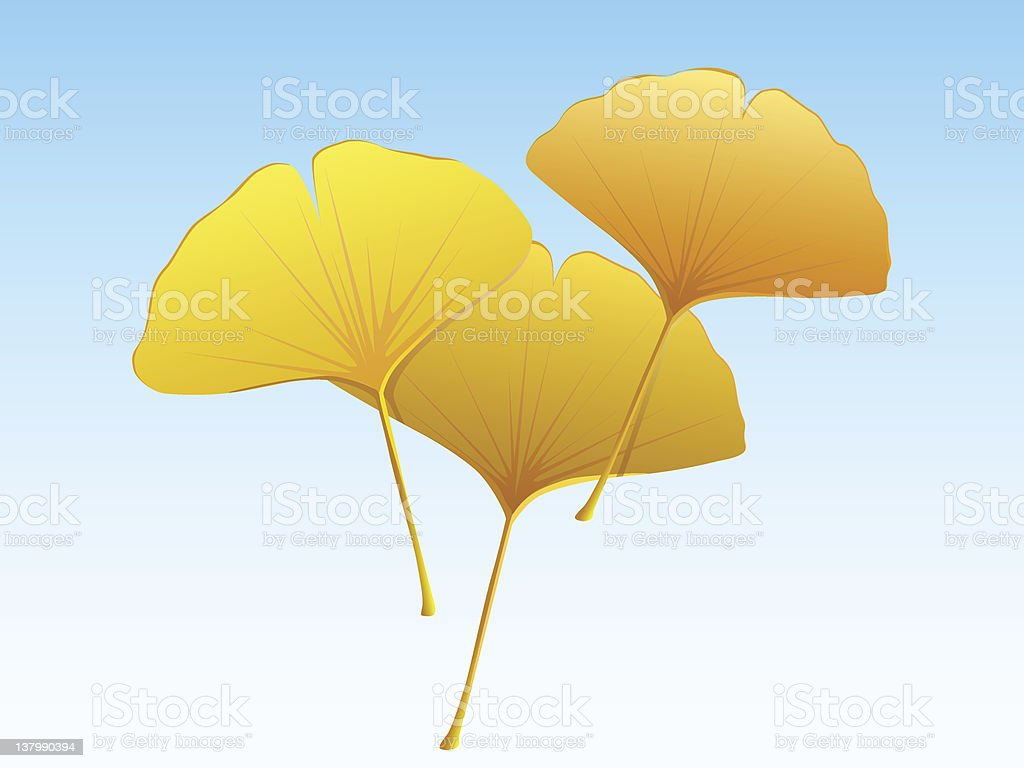 Ginkgo leaves in golden color royalty-free stock vector art