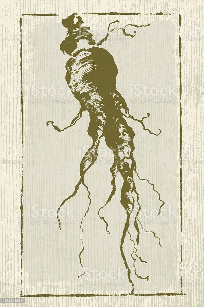 Ginseng Root royalty-free stock vector art