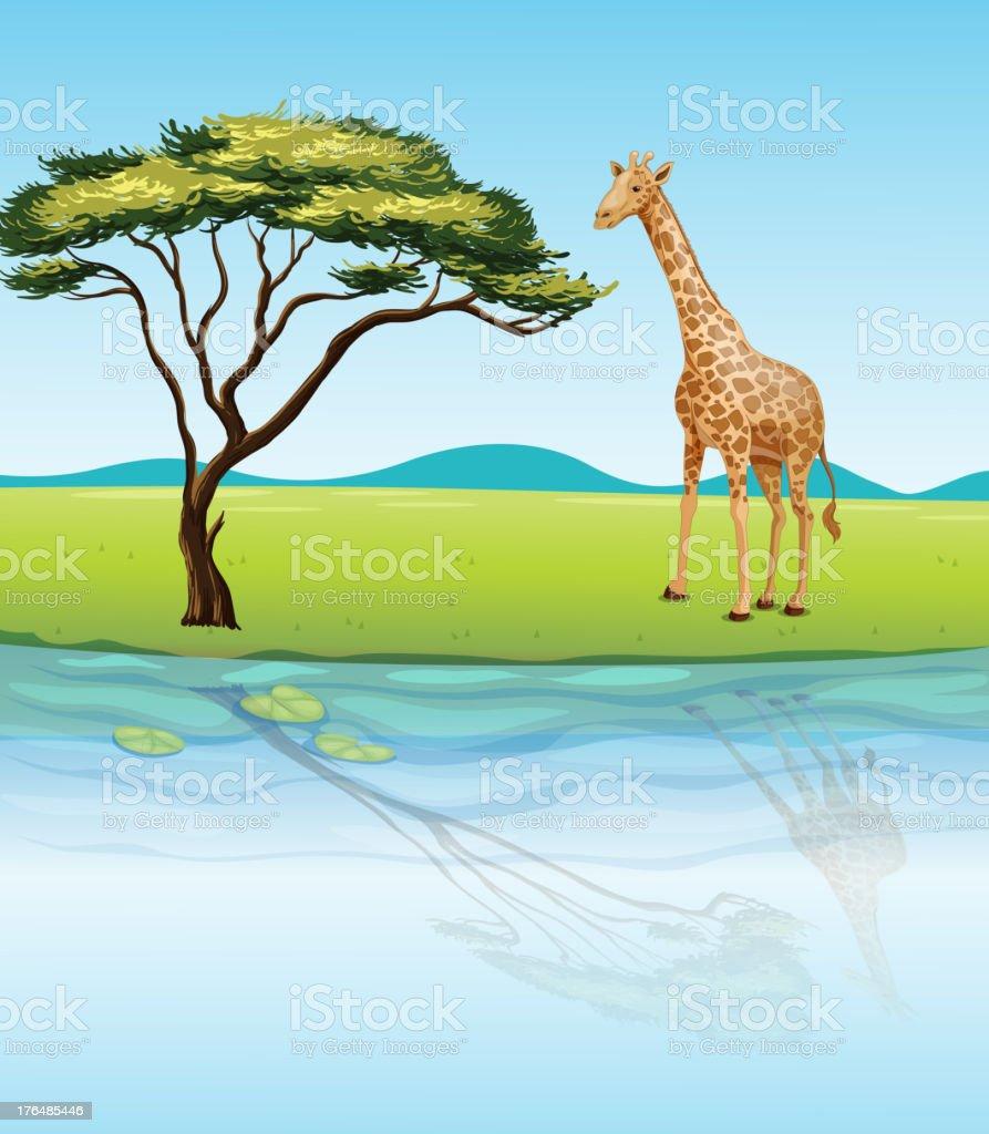 Giraffe beside the river vector art illustration