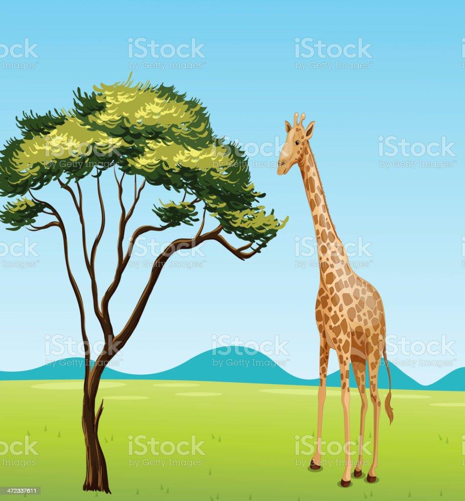 Giraffe by a tree vector art illustration