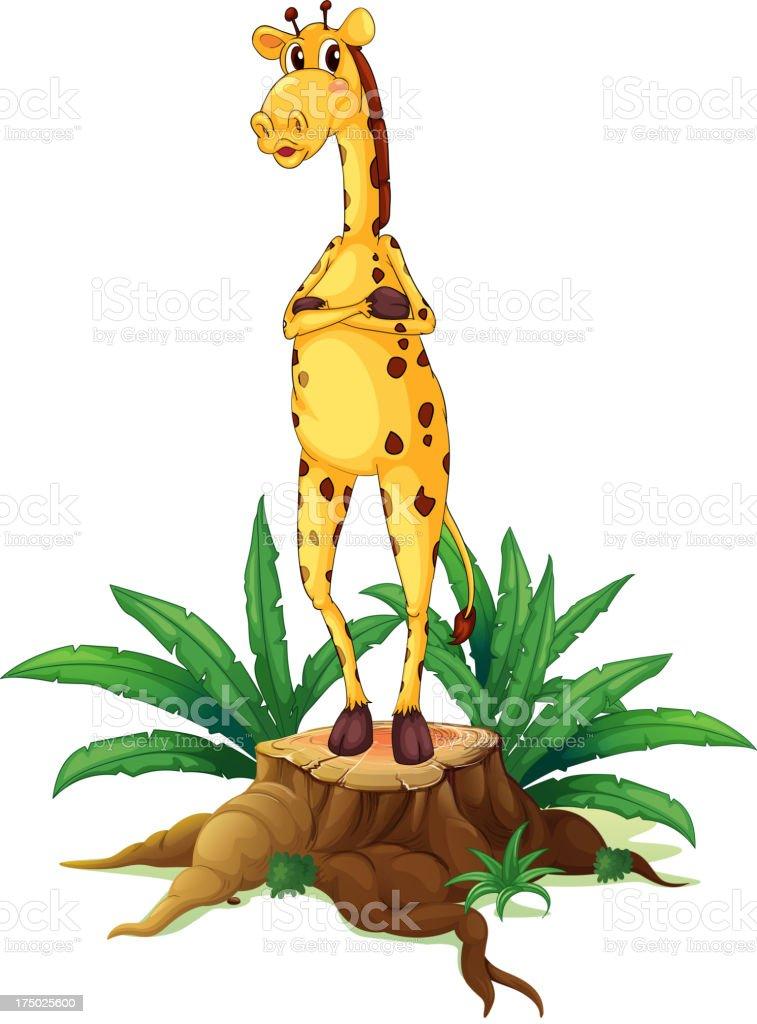 Giraffe standing above a stump royalty-free stock vector art