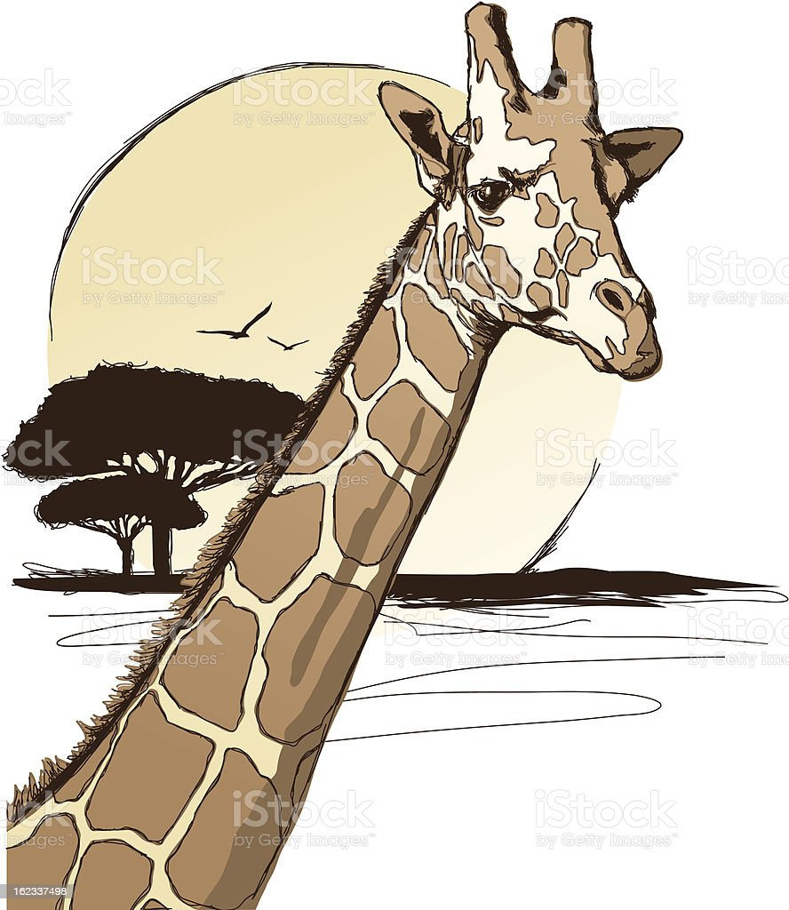 Giraffe vector art illustration