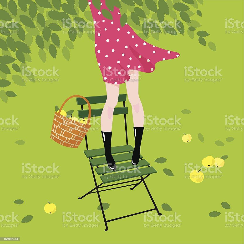 Girl gathers apples. royalty-free stock vector art