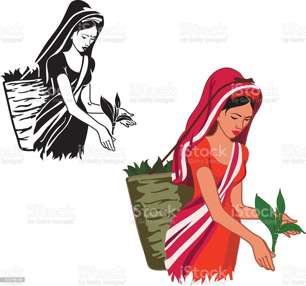 girl is working at produce tea vector art illustration