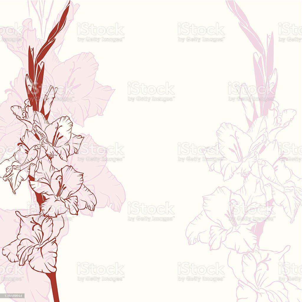 Gladiolus flowers background vector art illustration