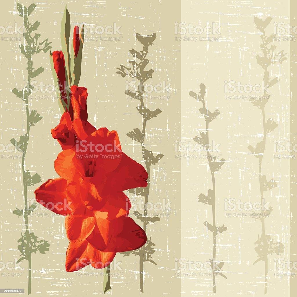 gladiolus vector art illustration