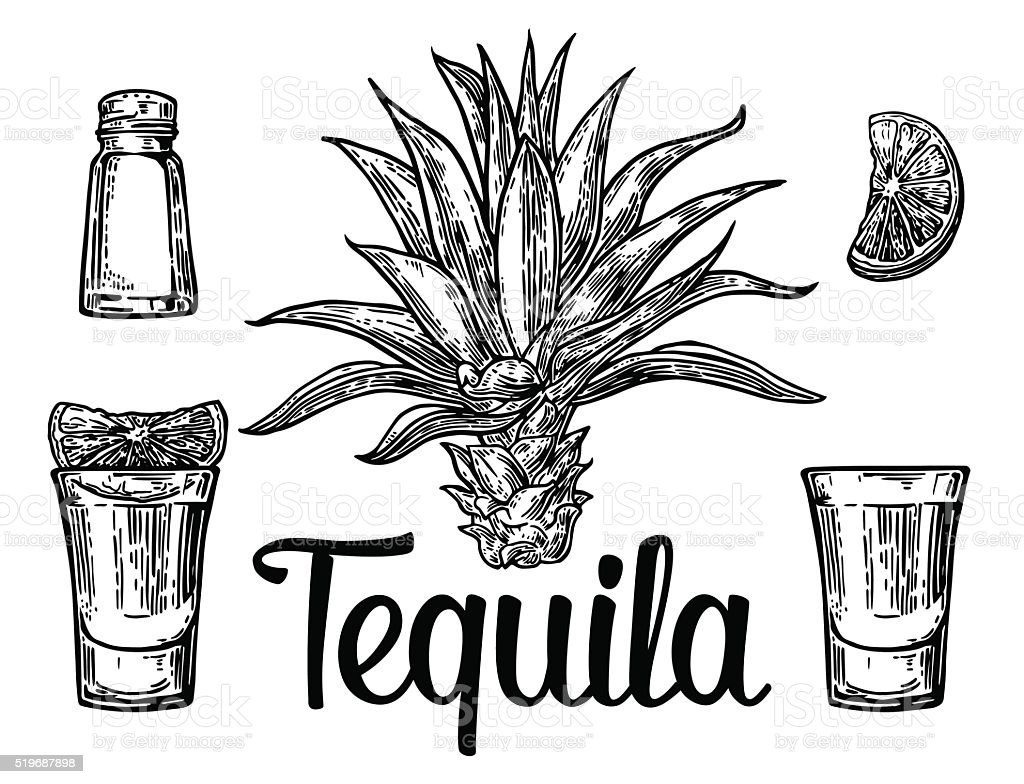 Glass and botlle of tequila. Cactus, salt, lime vector art illustration