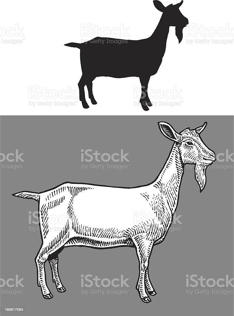 Goat - Farm Animal royalty-free stock vector art