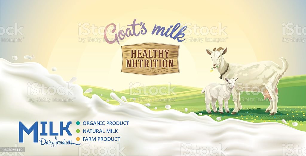 Goats milk poster. vector art illustration