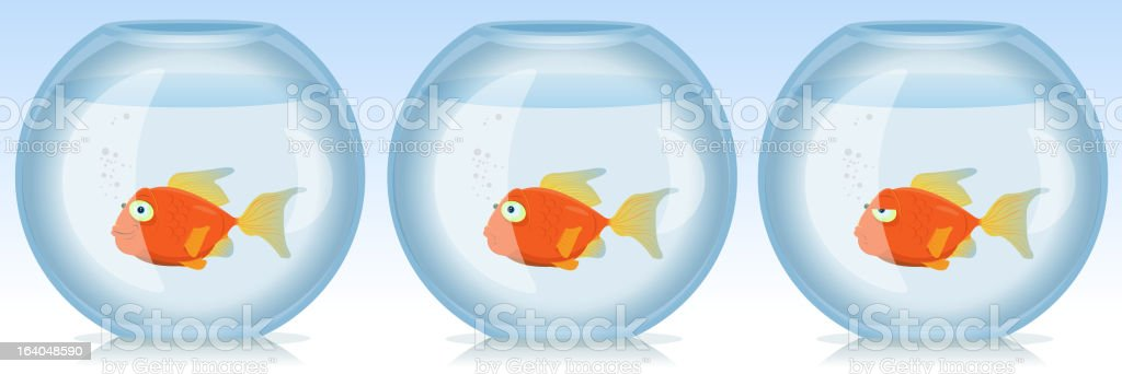 Gold Fish Life And Times In Aquarium royalty-free stock vector art