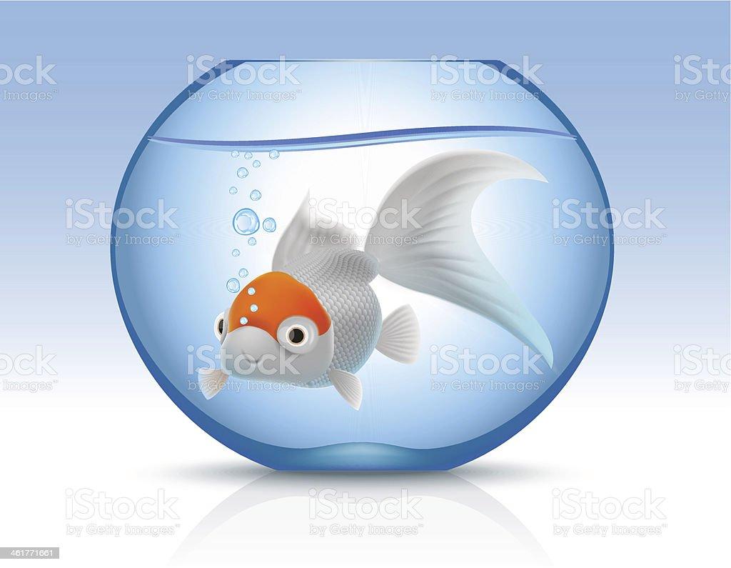 Golden fish in blue aquarium royalty-free stock vector art