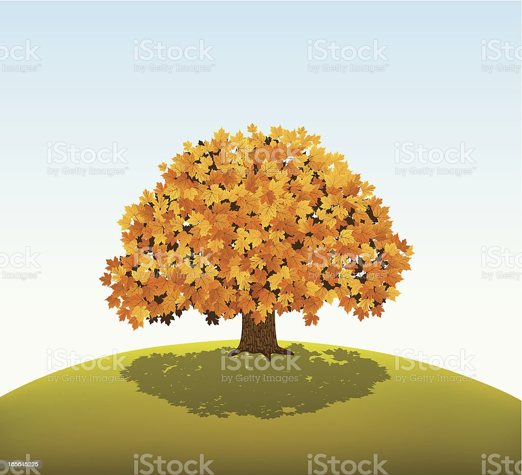 Golden Maple Tree vector art illustration