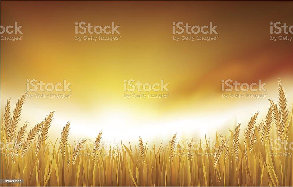 Golden Paddy Field vector art illustration