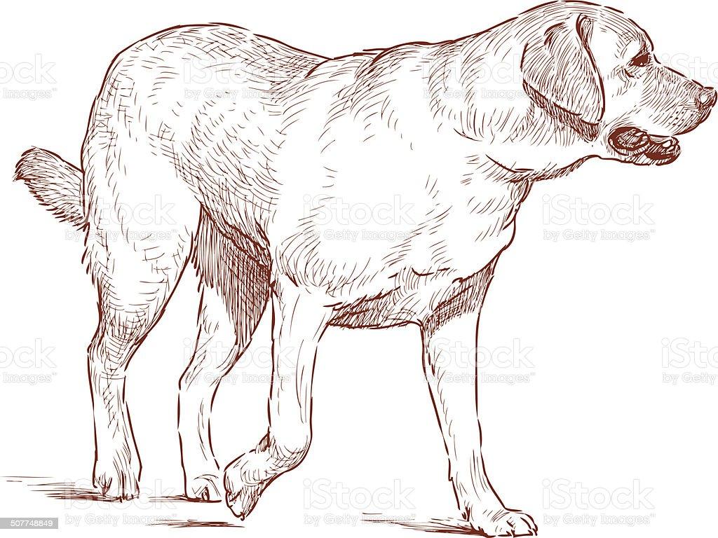 Golden Retriever vector art illustration