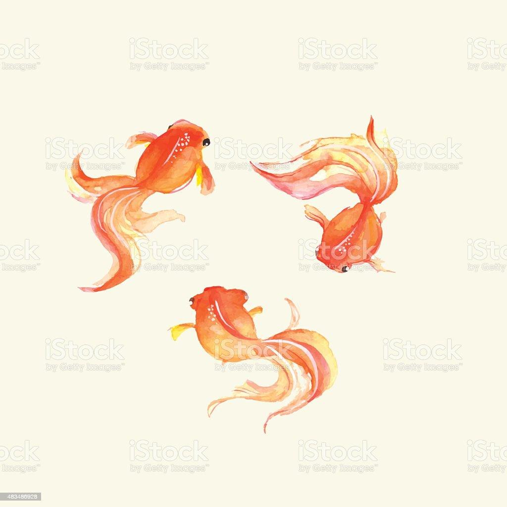 金魚ます。水彩ます。手描きのベクターイラストレーション - イラスト素材...