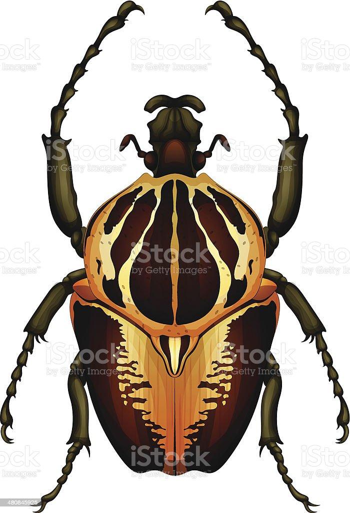 Goliathus regius - Goliath beetle royalty-free stock vector art