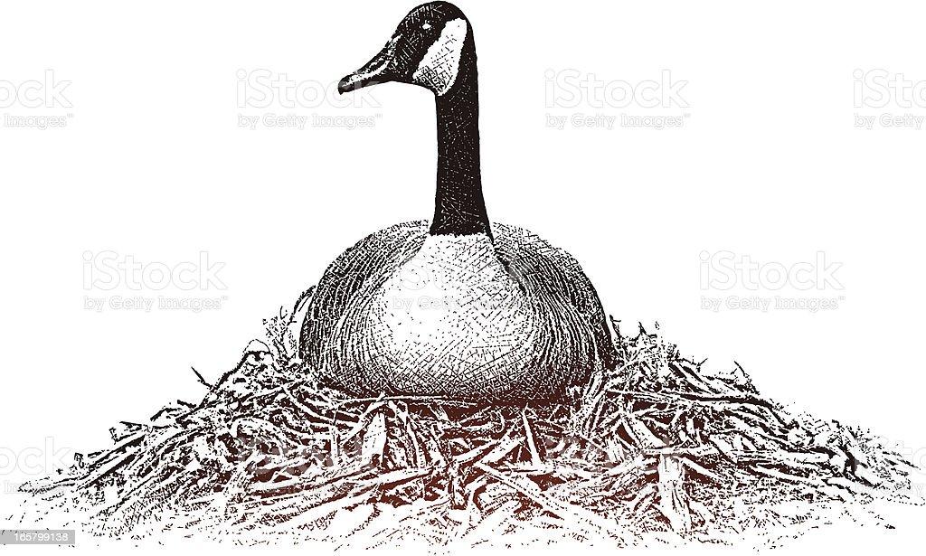 Goose On Nest royalty-free stock vector art