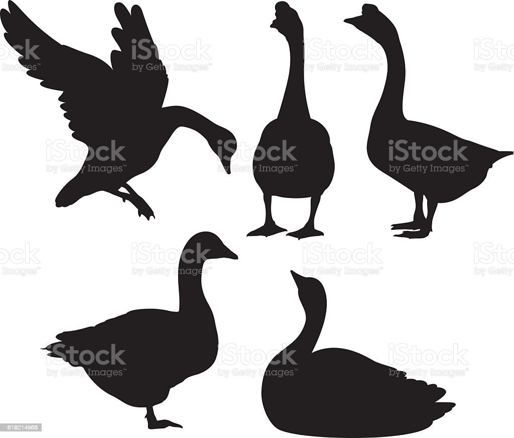 Goose Silhouettes vector art illustration