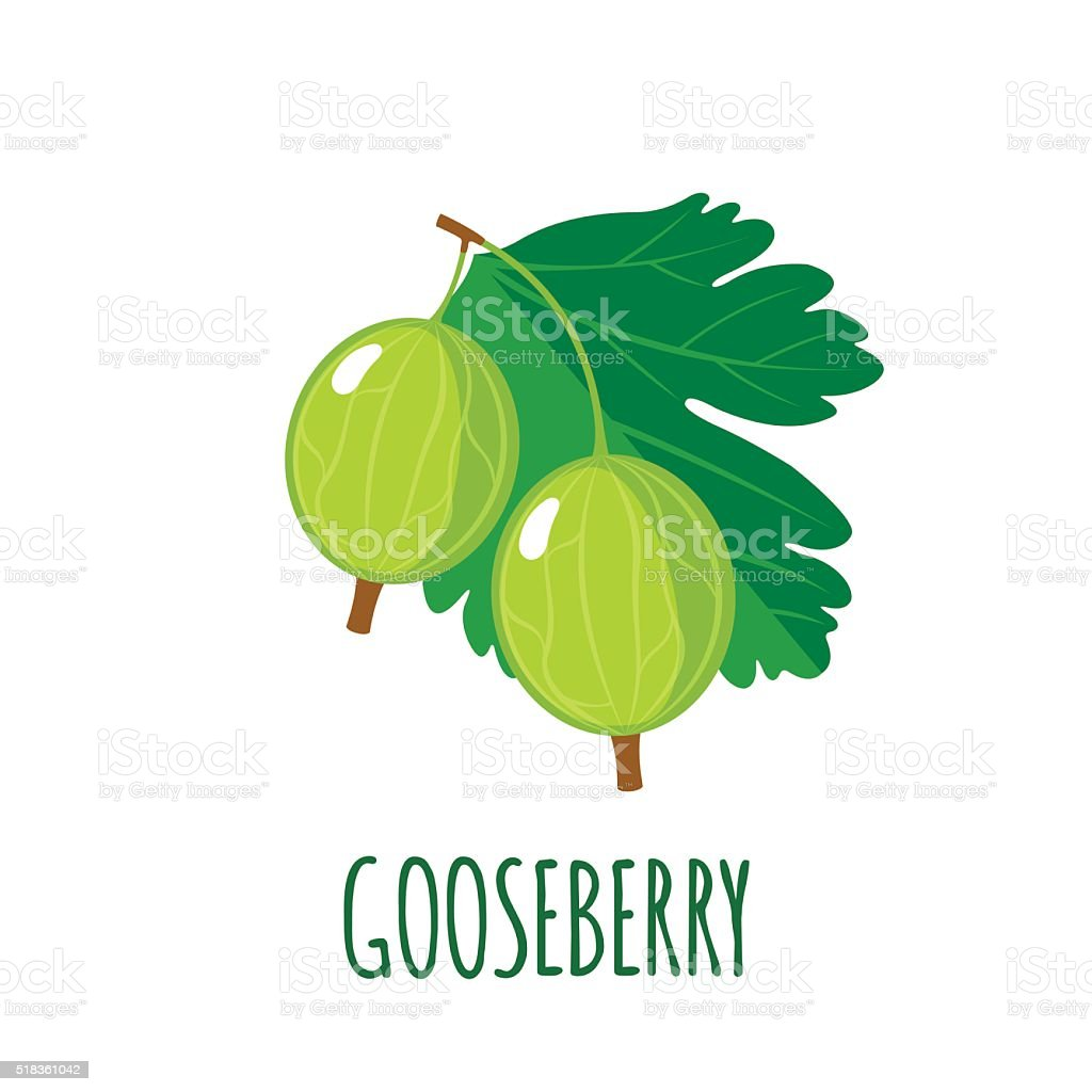 Gooseberry icon in flat style on white background vector art illustration