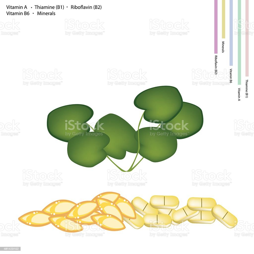 Gotu Kola with Vitamin A, B1, B2 and B6 vector art illustration