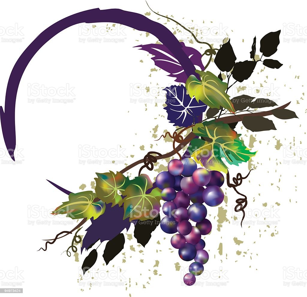 Gradient Mesh Grunge GrapeVine and Grape Bunch Design Element royalty-free stock vector art