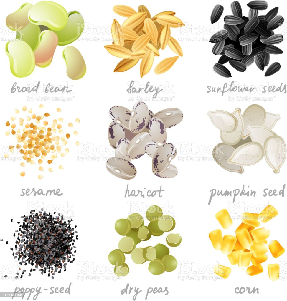 Grains, seeds and beans vector art illustration