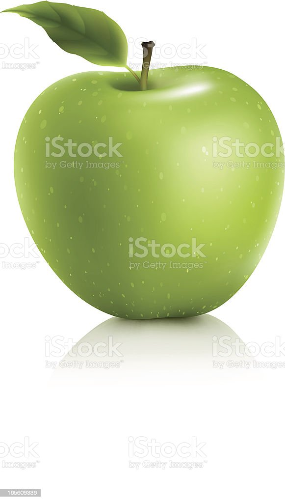 Granny Smith Green Apple vector art illustration