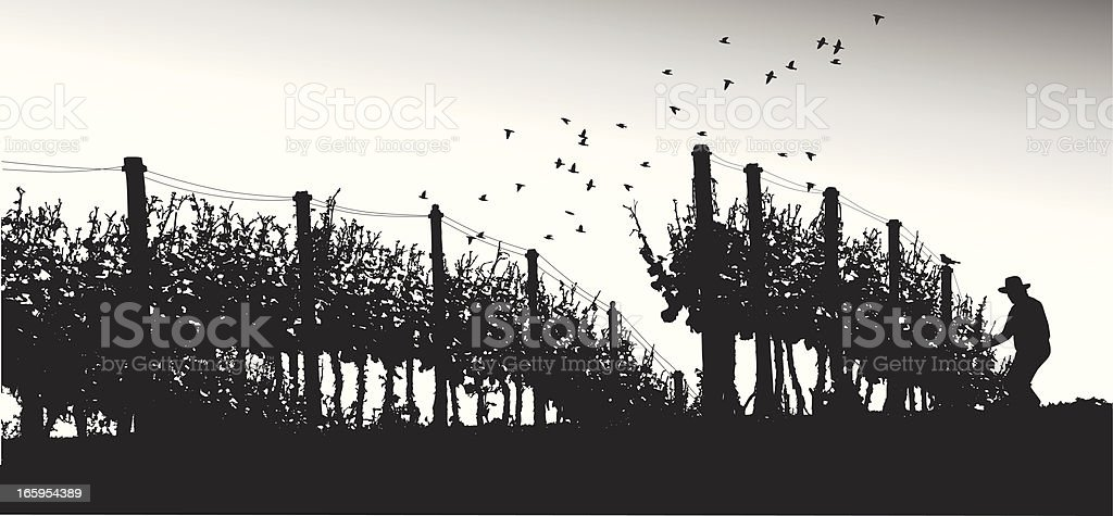 Grape Agriculture Vector Silhouette vector art illustration
