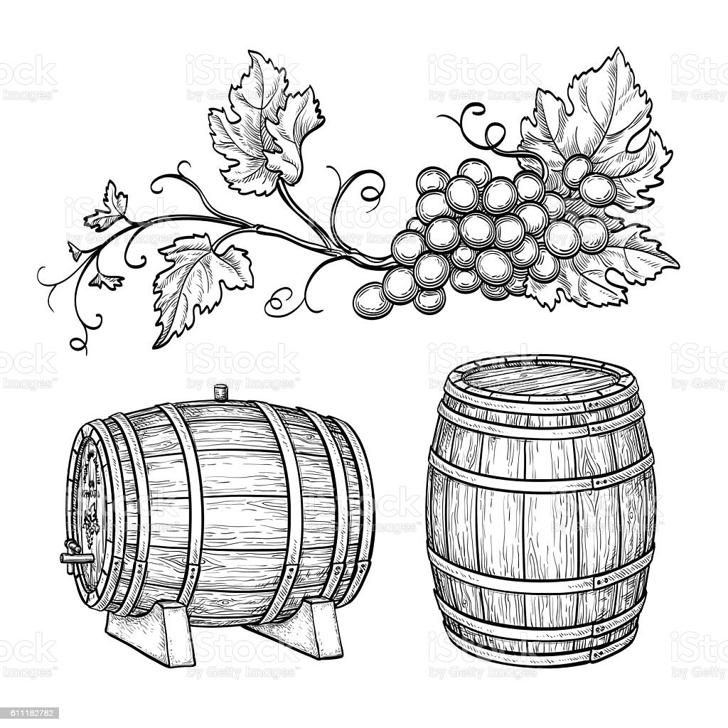 Grape branches and wine barrels. vector art illustration