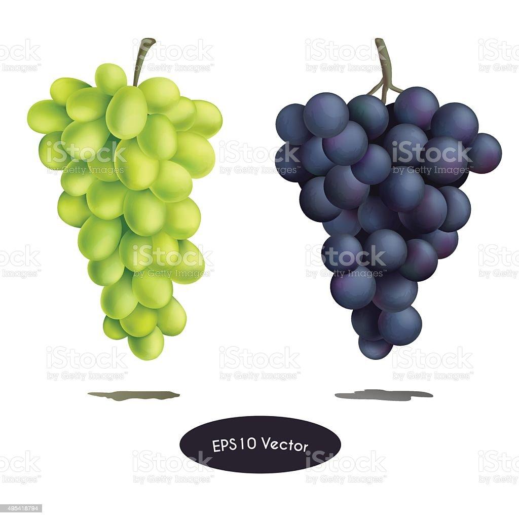 grape set vector art illustration