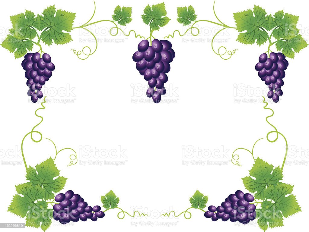 Grape royalty-free stock vector art