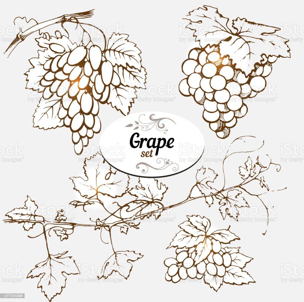 Grape vector art illustration