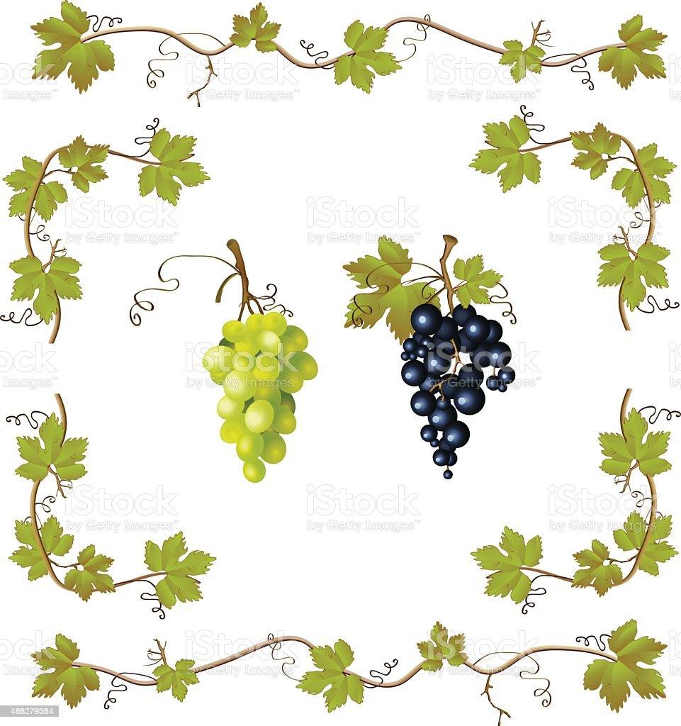 Grape vector set vector art illustration
