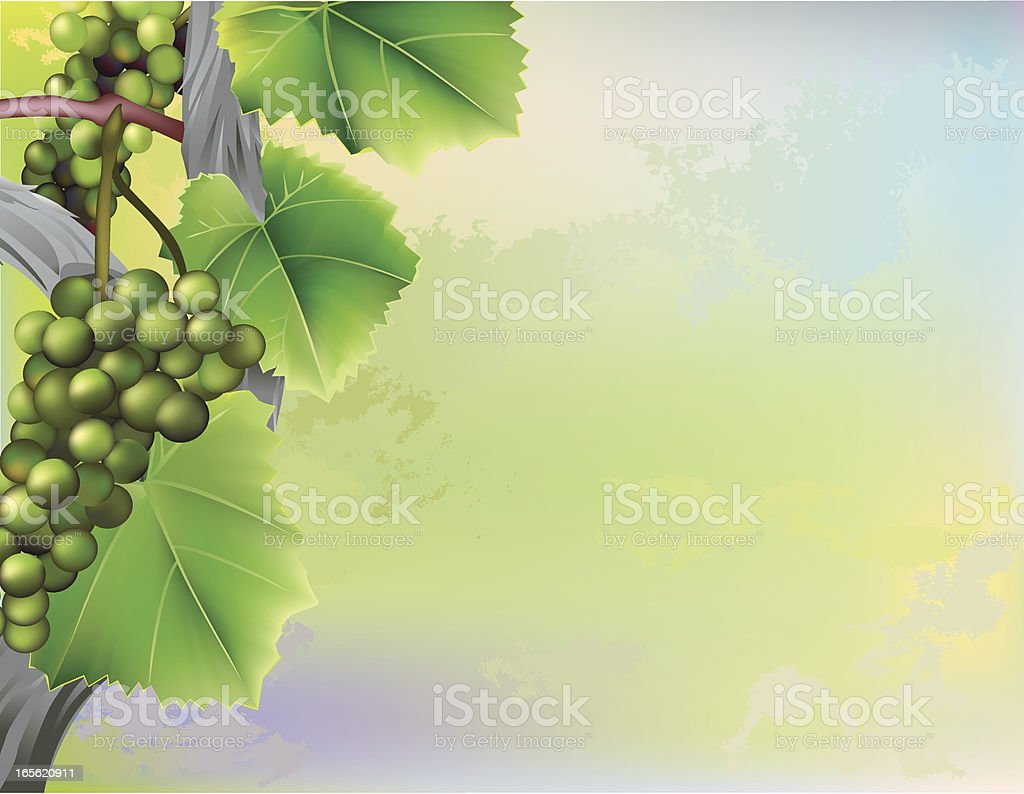 Grape vine climbing along abstract background vector art illustration