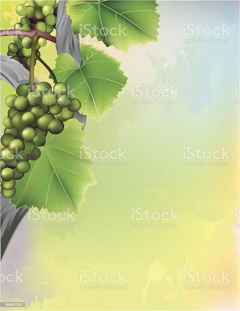 Grape vine climbing along abstract background royalty-free stock vector art