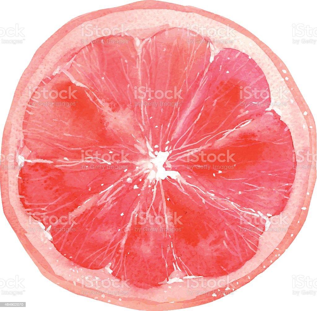 grapefruit vector art illustration