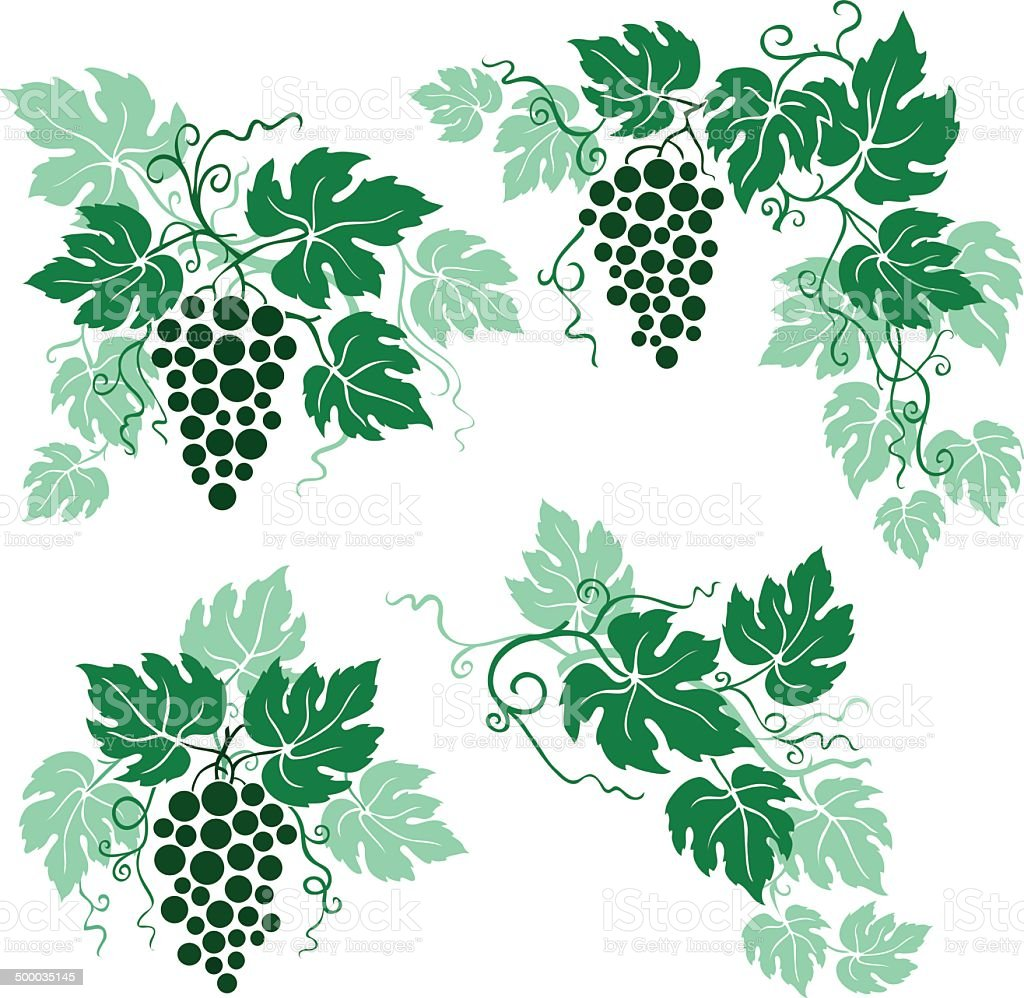 Grapes and Vine Leaves in Green royalty-free stock vector art