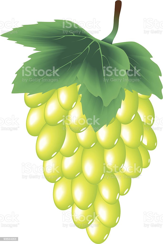 Grapes cluster royalty-free stock vector art