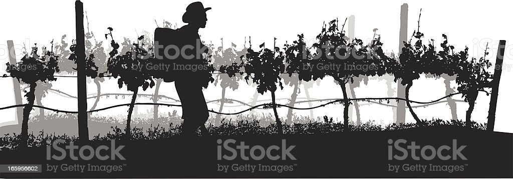 Grapes Of Wine Vector Silhouette vector art illustration