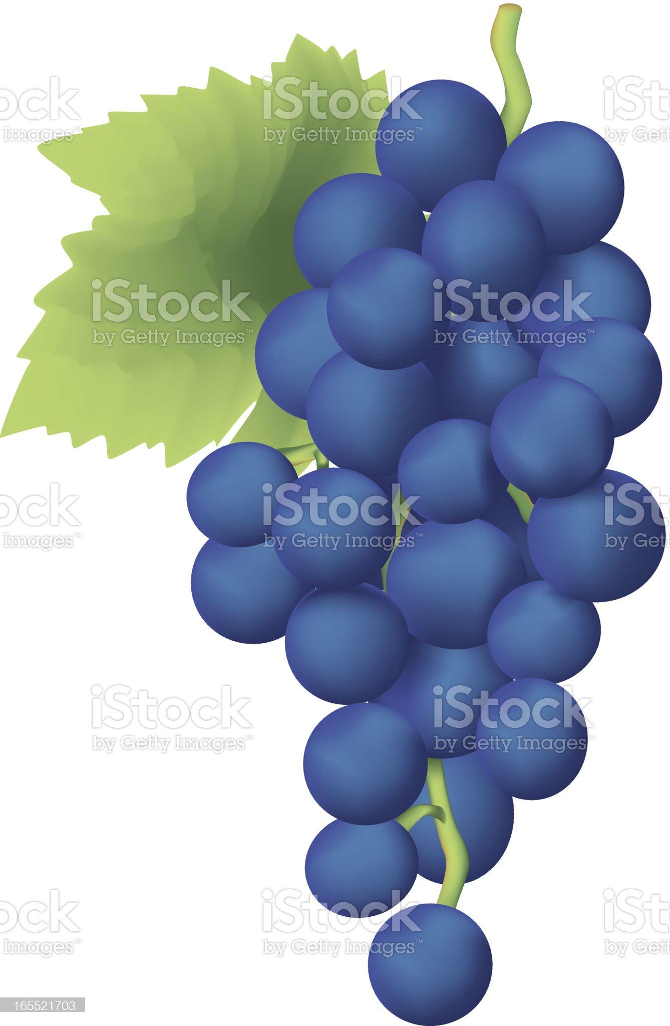 Grapes royalty-free stock vector art