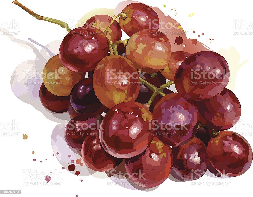 Grapes vector art illustration