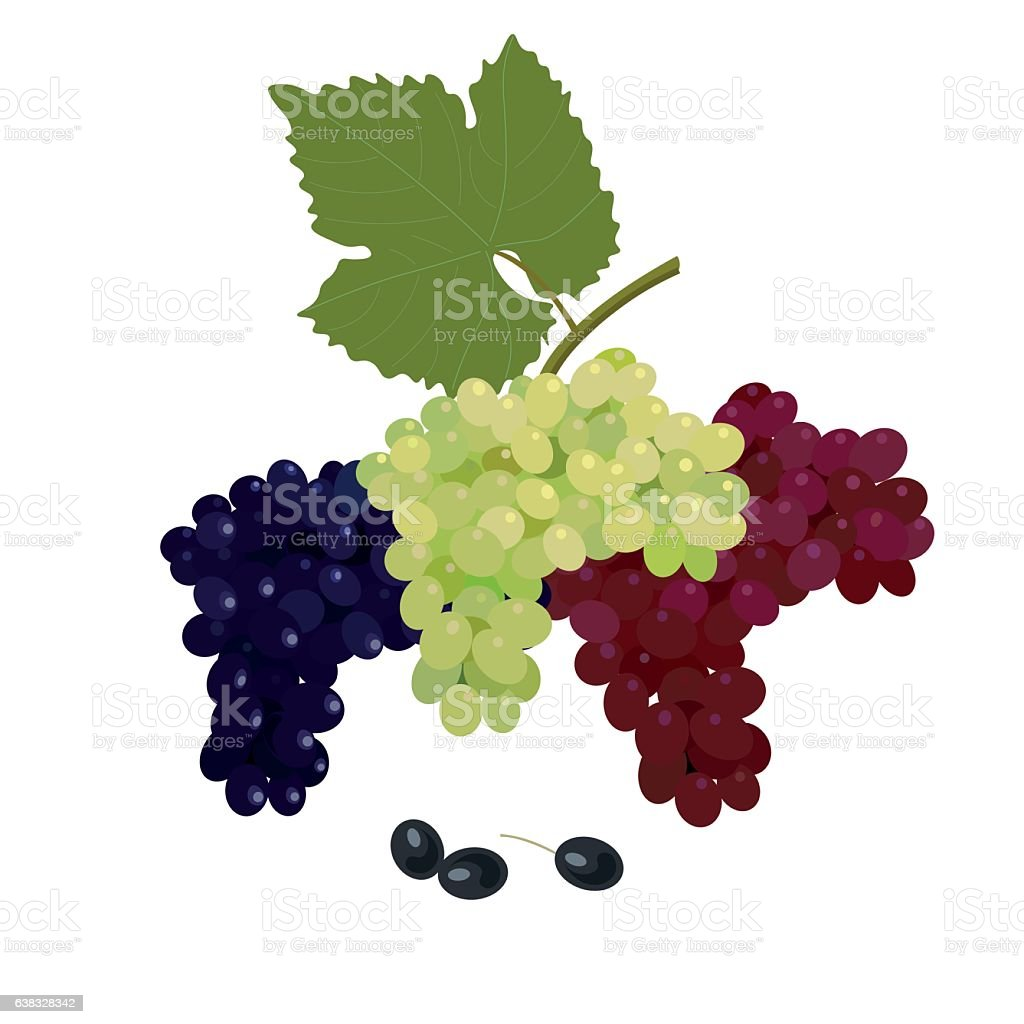 Vector bunches of grapes